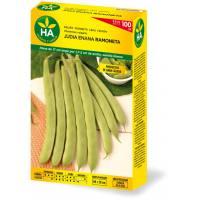 Semillas de judía verde enana ramoneta en caja de 100 gramos