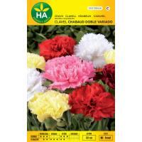 Semillas de flores de clavel Chabaud variado