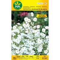 Semillas de flor gipsofila blanca