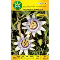Semillas de flor pasionaria blanca