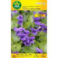 Semillas de flor violeta 4 estaciones