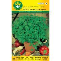 Semillas de perejil gigante aromático