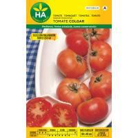 Semillas de tomate de colgar seleccionado