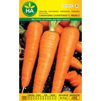 Semillas de zanahoria Chantenay