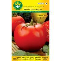 Semillas de tomate tipo tres cantos